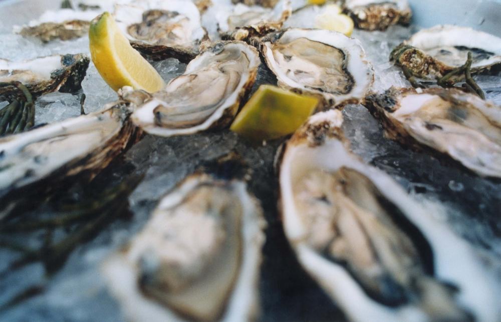 Jaap Vliegentharthierachter komt en stukje over oesters